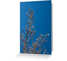 Mother Nature's Christmas Decorations - Gleaming Icy Baubles in Blue Greeting Card
