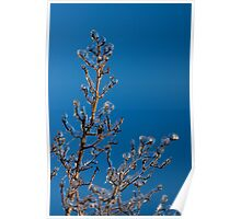 Mother Nature's Christmas Decorations - Gleaming Icy Baubles in Blue Poster
