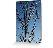 Mother Nature's Christmas Decorations - Icy Twig Jewels Greeting Card