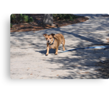 Buddy Walk 4 Canvas Print