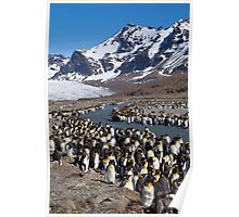King Penguins, St Andrew's Bay, South Georgia Island Poster