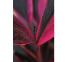 A new born leaf Photographic Print