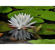 The Lily & The Frog Photographic Print