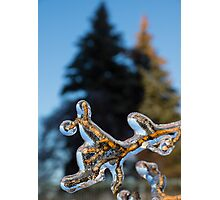 Mother Nature's Christmas Decorations - Encapsulated Branch Photographic Print