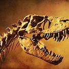 T - Rex by Alyce Taylor