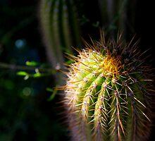 Prickly by Marius Brecher