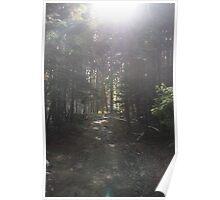 woodland Poster