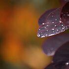 Fall Rain by Tracy Friesen
