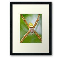 St. Andrews' Cross spider Framed Print