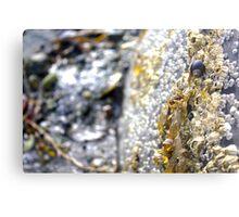 Ocean Rocks Metal Print