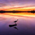 Heron Feeding Time by Adam Gormley
