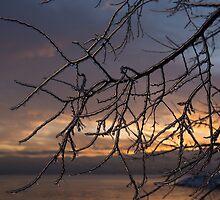 A Sunrise Through the Icy Branches by Georgia Mizuleva