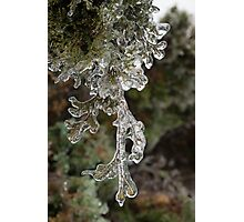 Mother Nature's Christmas Decorations - Cypress Branches Photographic Print