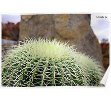 cacti depth Poster