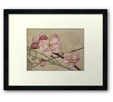 Peach Blossoms Framed Print