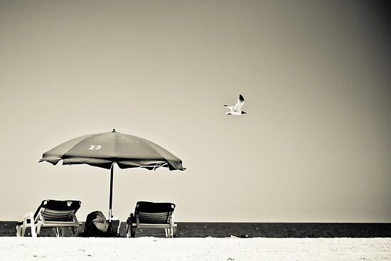 Umbrella. Seagull. Greyscale by villich