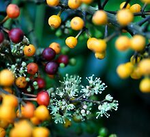 Blooming Berries by Catherine C.  Turner