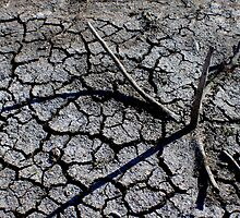 Cracked Earth by Tracey Phillips
