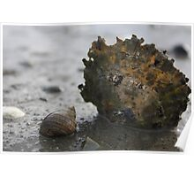 Shell and Snail Poster
