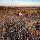 Moorland Textures by Simon Bowen