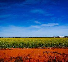Summer Landscape Australia by Thiru Murugan