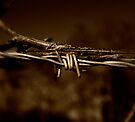 Barbed Wire by Nigel Bangert