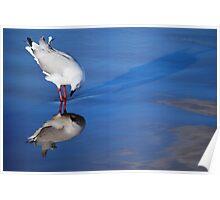Gull Vanity! Poster