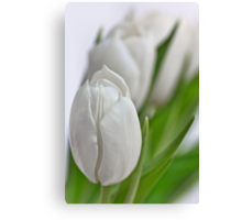 Fresh Tulips... Canvas Print