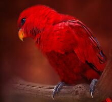 Red Parrot by Karen Martin