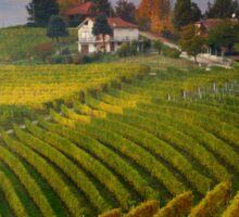 Autumnal vineyards  Sticker