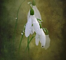 Snowdrops and Raindrops by Karen Martin IPA