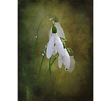 Snowdrops and Raindrops Photographic Print