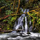 All That Beauty by Charles & Patricia   Harkins ~ Picture Oregon
