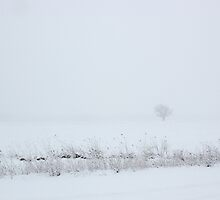 Lone Tree in Snow by marybedy