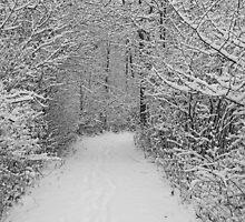 Snowy Forest Trail by marybedy