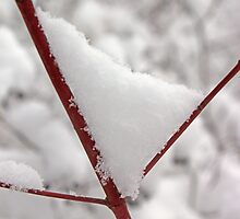Snowy Red Twig by marybedy