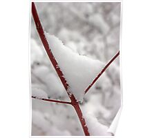 Snowy Red Twig Poster