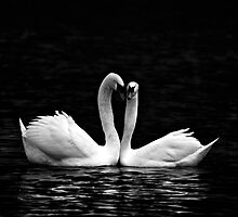 Majestic Couple by Paul Mayall