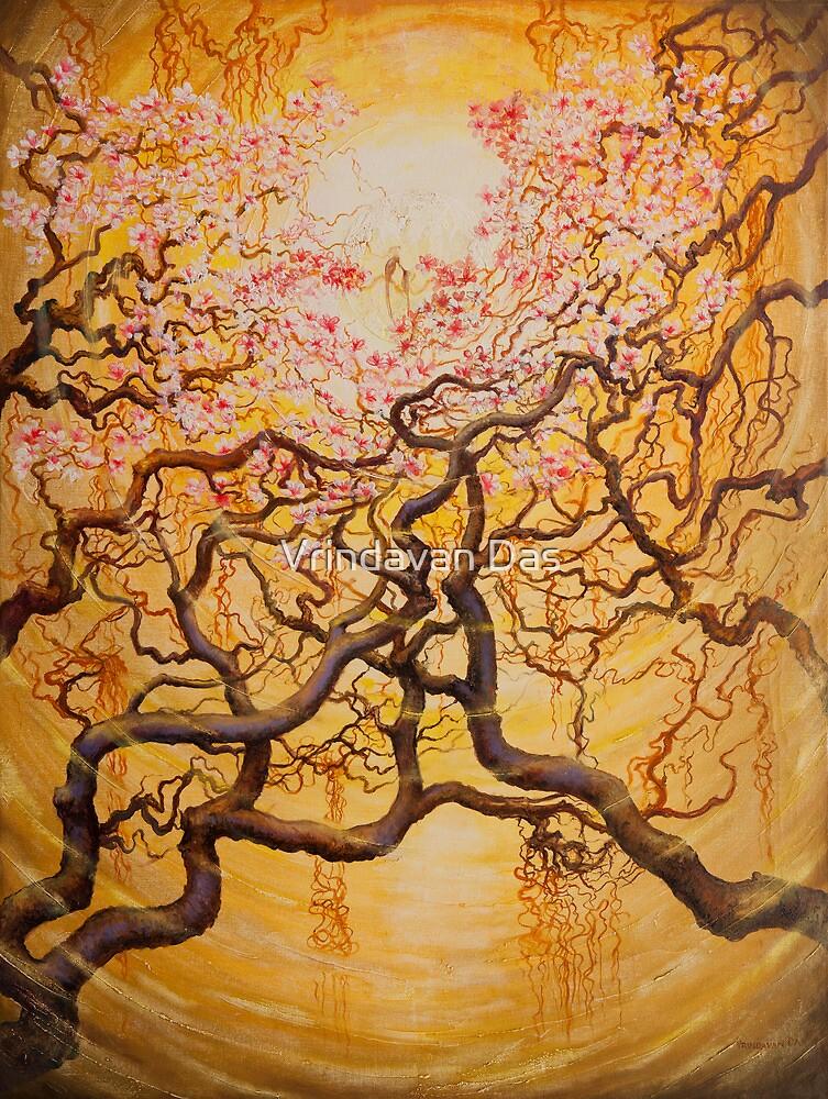 Sun and Sakura by Vrindavan Das