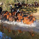 Horse muster by Chris Brunton