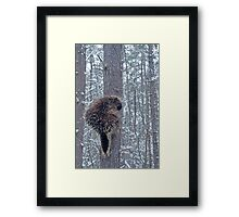 Prickly Situation Framed Print