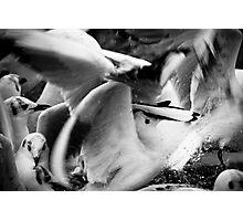 Animal chaos Photographic Print