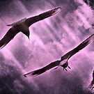 Soaring the Thermals by hampshirelady