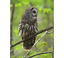 Barred Owl Portrait Photographic Print