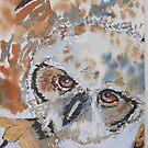 Big Eyed Owl by ddonovan