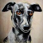 Italian Greyhound by Hilary Robinson