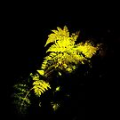 Fern. by Livvy Young