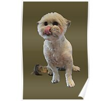 Cute licking puppy. Poster