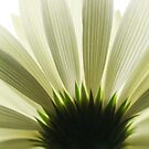 Living room mural Gerbera flower 4 by Falko Follert