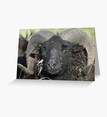 Are You Looking At Me??? Greeting Card